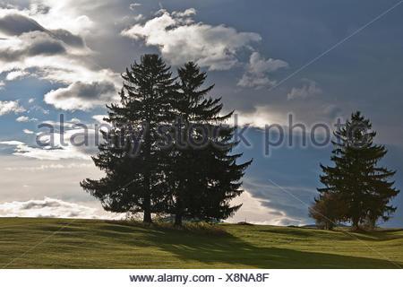conifers in voralpenland - Stock Photo