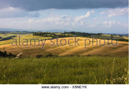 Green rolling hills and grass in the rural landscape of Crete Senesi (Senese Clays) province of Siena Tuscany Italy Europe - Stock Photo