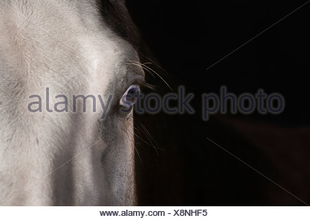 detail of horse head - Stock Photo