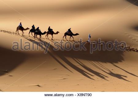 Camel caravan crossing the sand dunes of the Sahara, Merzouga, Morocco, Africa - Stock Photo