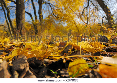 Foliage at a nature reserve called 'Die Reit' in the south of Hamburg during fall. - Stock Photo