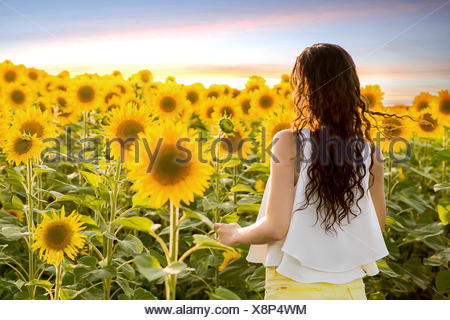 Young woman standing in sunflower field - Stock Photo
