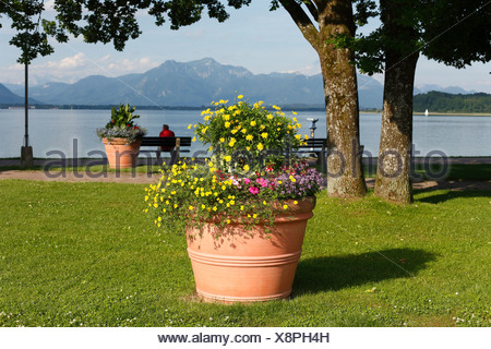 Flower tub on the lakeside promenade in Prien on Lake Chiemsee, Chiemgau, Upper Bavaria, Germany, Europe - Stock Photo