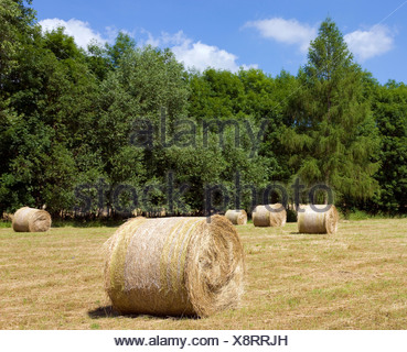 Field and forest near Muehlhausen, Thuringia, Germany, Europe - Stock Photo