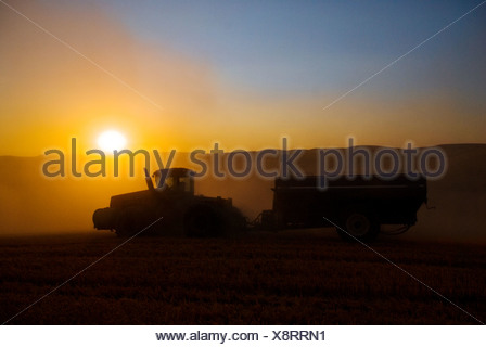 A tractor pulls a grain wagon through a wheat field at sunset during wheat harvesting operations / Washington, USA. - Stock Photo
