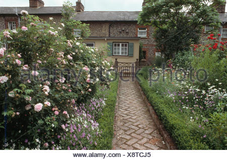 Brick herringbone paved path with box edging between borders with pink roses in cottage garden - Stock Photo