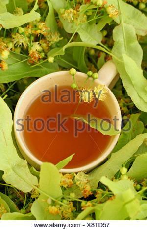 Linden tree infusion Tilia platiphyllos or cordata - Stock Photo