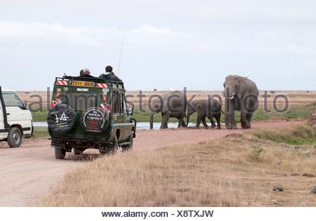 Elephant family walking down road towards Toyota Landcruiser in Amboseli National Park Kenya East Africa - Stock Photo