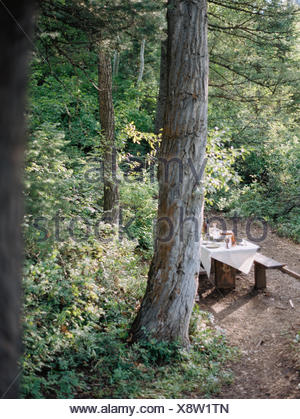 A picnic table set for a party with a cloth and glasses, in a woodland glade. - Stock Photo