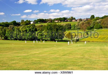 Cricket on a summer evening - Stock Photo