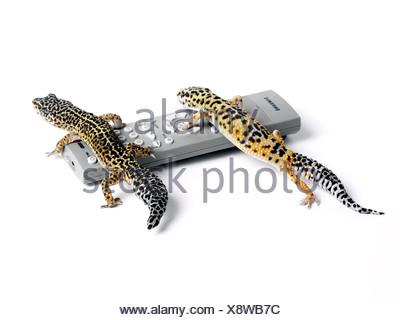 Geckos on a remote control. - Stock Photo