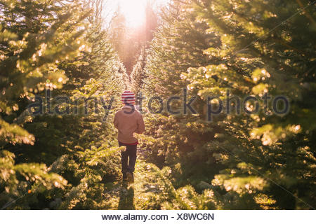 Boy walking between two rows of trees at a Christmas tree farm, United States - Stock Photo