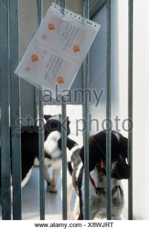 Dogs left behind in an animal shelter in cages with information. These dogs will be killed as there is not enough place to shelter t..- SerieCVS500202318 - Stock Photo