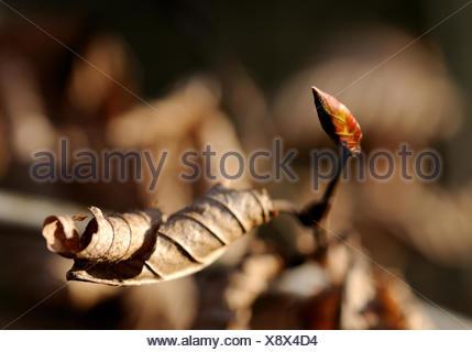 twig,bud - Stock Photo