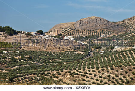 Olive groves in the Jaén province, between Baeza and Jaén, Andalusia, Spain, Europe - Stock Photo