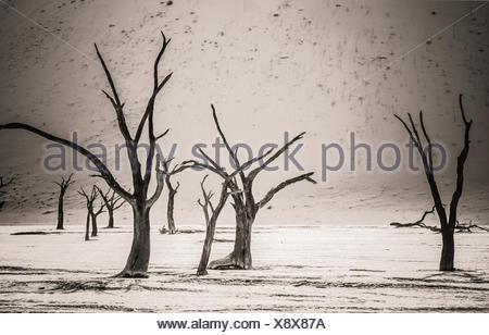 Dead Trees in Deadvlei - Stock Photo