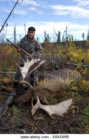 Hunter standing next to recently killed bull moose. Yukon Territory, Canada. Model Released. - Stock Photo