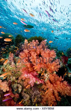 Reef scene. - Stock Photo