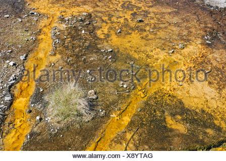 Emerald Terrace, sinter deposits coloured by hot-water algae, Orakei Korako Cave and Thermal Park, Hidden Valley, Taopo-Rotorua - Stock Photo