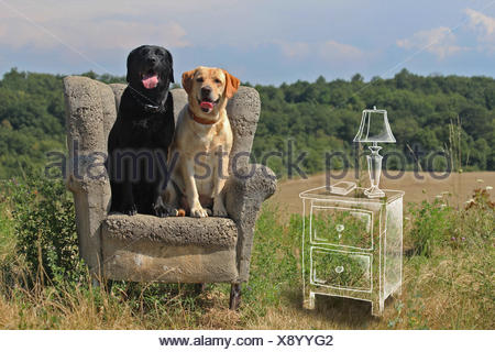 Conceptual image of dogs sitting in a living room - Stock Photo