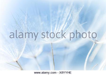 plants flowers - Stock Photo
