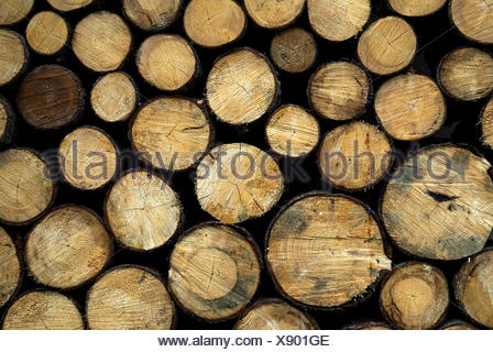 wood stack stacked sawed off bruised blown off complete perfect baumstmme ber - Stock Photo