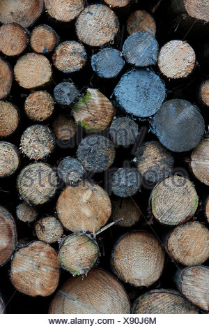 Stacked spruce logs (Picea), clean-up after a storm, Lueerwald (Luer Forest), Sauerland, North Rhine-Westphalia, Germany - Stock Photo