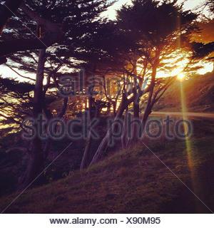 USA, California, San Francisco, View of San Francisco cypress