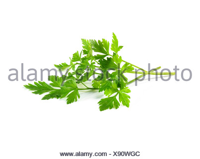 Fresh flat parsley - Stock Photo
