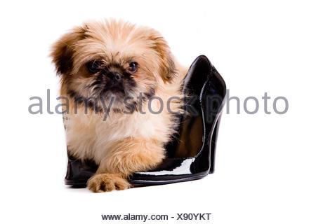 isolated dog puppy - Stock Photo