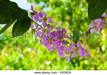 flourish flourishing - Stock Photo