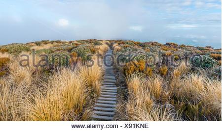 Trail through swampland, Pouakai Circuit, Egmont National Park, Taranaki, North Island, New Zealand - Stock Photo