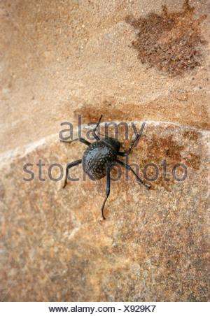 Close up of black beetle on stone - Stock Photo