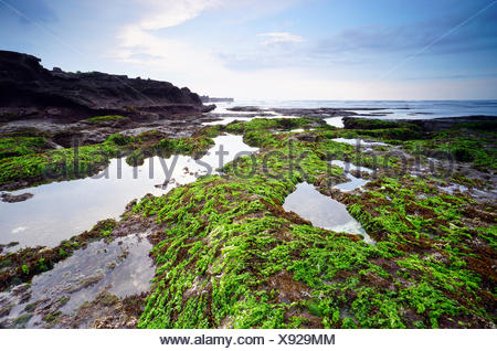 Moss covered rocks on Mengening beach at low tide, Bali, Indonesia - Stock Photo