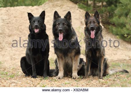 3 dogs - Stock Photo