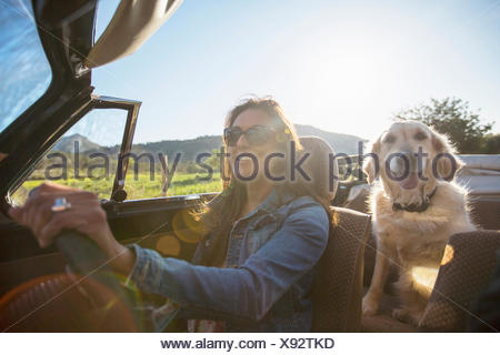 Mature woman and dog, in convertible car - Stock Photo