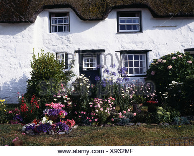 Pink flowering plants in garden border in front of traditional thatched white cottage - Stock Photo