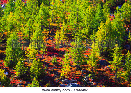 Trees, green, Switzerland, Valais, larches, autumn - Stock Photo