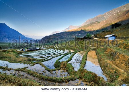 Irrigated rice terraces, rice paddies in Sapa or Sa Pa, Lao Cai province, northern Vietnam, Vietnam, Southeast Asia, Asia - Stock Photo