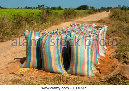 Bulging sacks of rice ready for collection on a dirt road, Battambang, Cambodia, Southeast Asia, Asia - Stock Photo