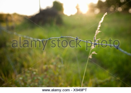 Barbed wire fence in field - Stock Photo