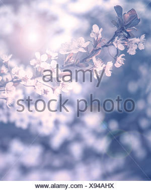 close blue beautiful - Stock Photo