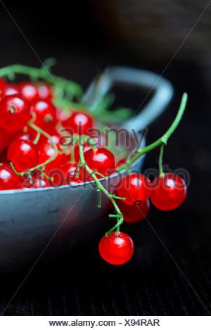 Rote Johannisbeeren in Schale, Ribes rubrum - Stock Photo