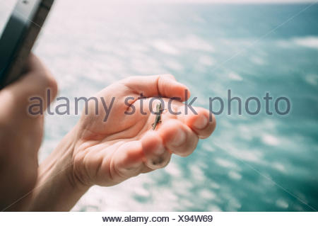 Insect On Human Hand - Stock Photo