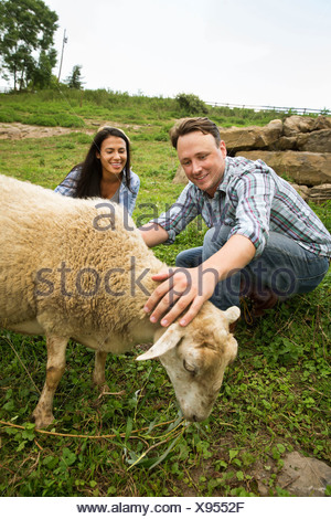 An organic farm in the Catskills. Two people with a sheep grazing. - Stock Photo