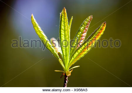 Close up on little budding leaves on branch - Stock Photo