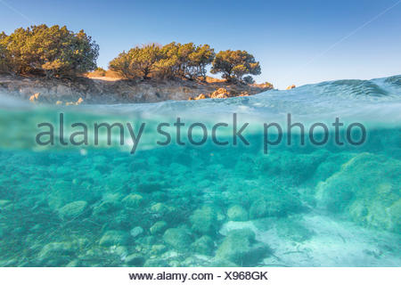 Half underwater photo with the sea bed and trees in Rena Bianca beach in Portisco (Olbia) Costa Smeralda, Olbia-Tempio province, Sardinia district, Italy - Stock Photo