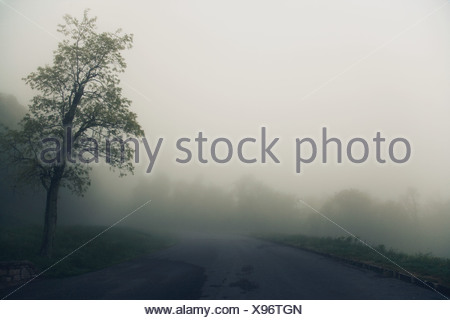 Tree and road in fog, Virginia, USA - Stock Photo