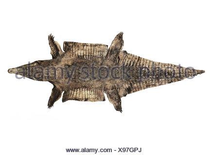 Old Alligator Skin - Stock Photo