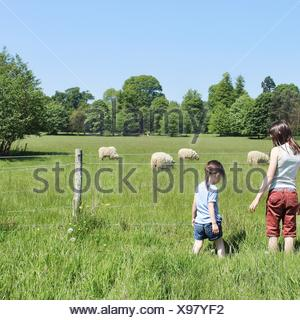 Rear view of two girls standing by fence looking at sheep - Stock Photo